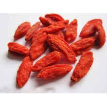 Goji Berry Price Good China Manufacture Supplying