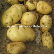 Holland Kartoffel