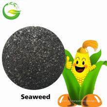 Extracto soluble en agua orgánico de la alga marina del fertilizante