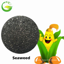 Organic Seaweed Extract Flake/Powder Fertilizer