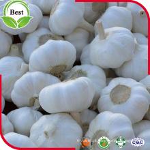 Alho branco puro de alta qualidade 5.0cm para exportação