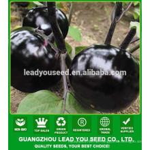 NE07 Yuanyuan rodada forma negra eggpalnt sementes fábrica