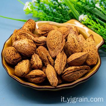 badam ha un alto valore nutritivo e medicinale mandorla