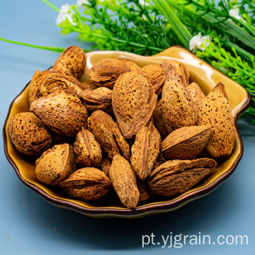 badam tem amêndoa de alto valor nutricional e medicinal