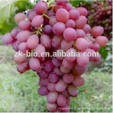 Extrait naturel de graine de raisin antioxydant