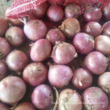 Export Standard Quality of Fresh Red Onion 5-7cm