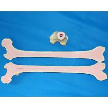 Modèle squelettique humain de squelettes de fémur pour la pratique de la chirurgie médicale (R010117)