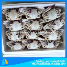 factory provide excellent whole round blue swimming crab