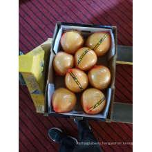 Fresh Fruit Organic Honey Pomelo High Quality
