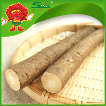 Root and Stem vegetables Chinese Fresh Burdock