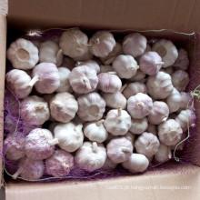 Alho fresco de pele roxa para o mercado brasileiro