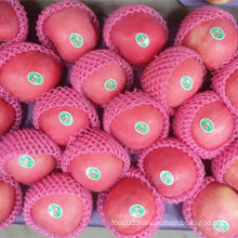 Red Color Fresh FUJI Apple