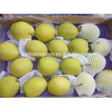 Shandong Pear/Low price pear/Shandong pear from China