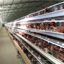 Zambia Layer Poultry Farm Chicken Cage For Sale