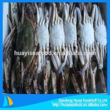 frozen new fishing blue swimming crab