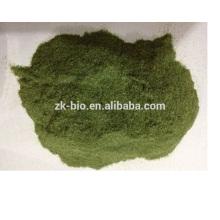 Polvo de Wheatgrass del extracto de la alta calidad el 100% Natural