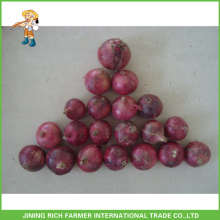 Good Quality Chinese Fresh Red Onion