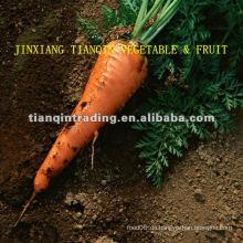 Rote Karotte aus China