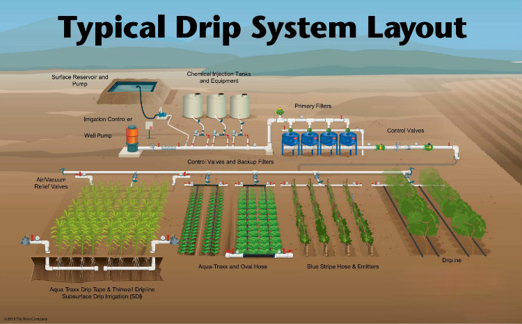 Typical Drip System Layout