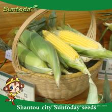 Suntoday internacional legumes nomes vegetais F1 mazie doce semente plantador de milho semeadora plantador para venda (61001)