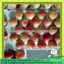 China vende al por mayor la manzana roja de gala