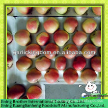 China wholesales red gala apple