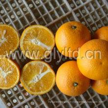 Chinois standard exporté frais Valencia Orange
