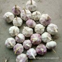 Good Quality New Crop Chinese Fresh White Garlic