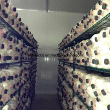 Green Epoxy Coated Wire Metal Mushroom Growing Storage Rack for Cold Room