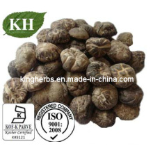 Shiitake Mushroom Extract Polysaccharides 30%