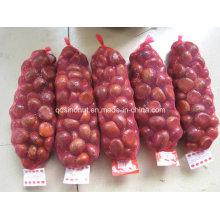 Новый урожай китайских свежих каштанов