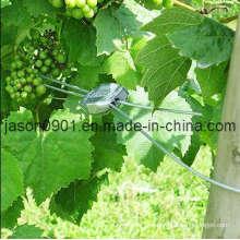 Arame fortemente galvanizado para vinhas