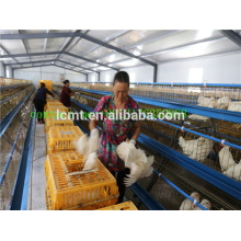 high quality best price poultry equipment for chicken shed