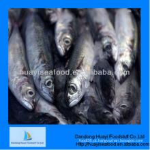 Congelados superior qualidade excelente sardinha excelente fornecedor