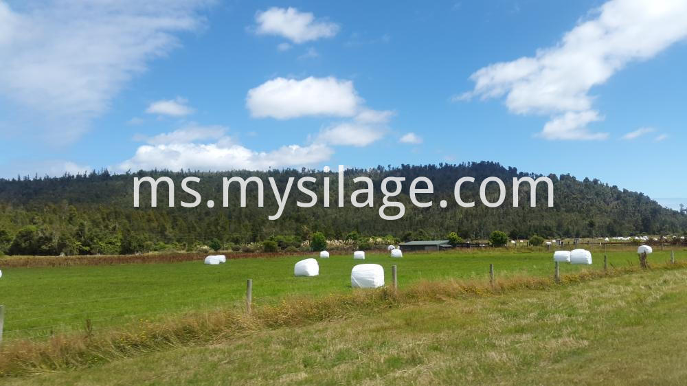 Round Silage Wrap Bale