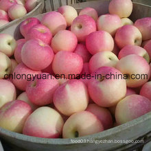 New Fresh Red Gala Apple (138/150/175/198#)