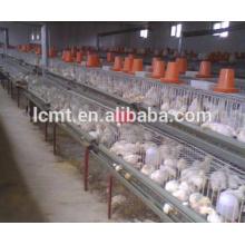 couche volaille élevage de poulets