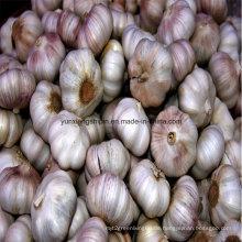 Chinesische neue Ernte Normaler weißer Knoblauch, roter Knoblauch
