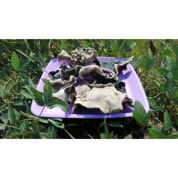 Hongos negros secos de espalda blanca y setas de madera de gran tamaño