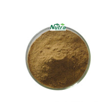 Organic Wild Mint Herb Extract Powder