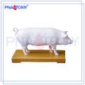PNT-AM41 Pig Acupuncture Modelo modelo anatômico animal