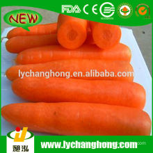 High Quality 2014 New Fresh Carrot Lowest Price