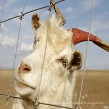 Sheep High Quality Galvanized Sheep Field Fence