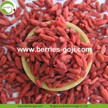 New Crop Factory Supply Torkad Ningxia Goji Berry