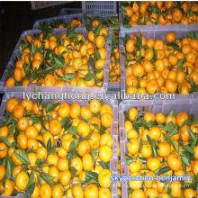 Желтые оранжевые фрукты / имена красных фруктов