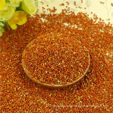 Red Broom Corn Millet for bird feed with good manufacturer