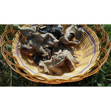 Sebo de oreja de árbol chino negro entero secado comestible cultivado