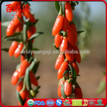 Health organic and conventional goji berry with low price