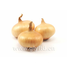 Chinese Fresh Red, Yellow Onion with Mesh Bag