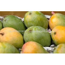 Fresh Mango ( New Crop )
